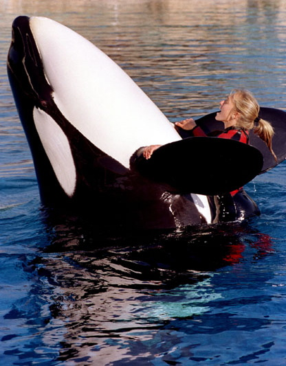 Death at SeaWorld: Where Is Tilikum, the Whale Who Killed