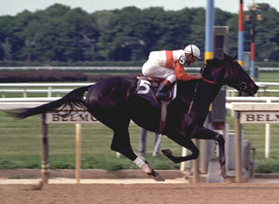 racehorses to remember ruffian